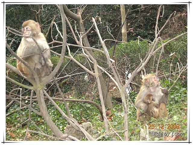 百度卫星定位地图 2009年12月贵州 和谐猴山,空灵黄果树瀑高清图片