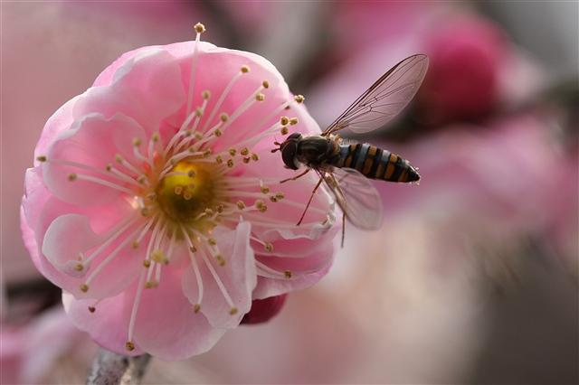 用一朵花开的时间,观生望死 - 深秋 - 深秋的故事的博客