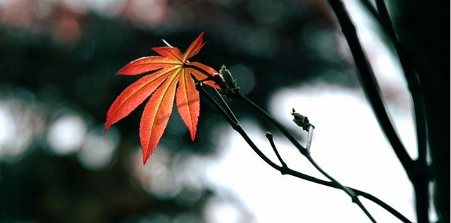 想念的日子(外三首) - 深秋 - 深秋的故事的博客