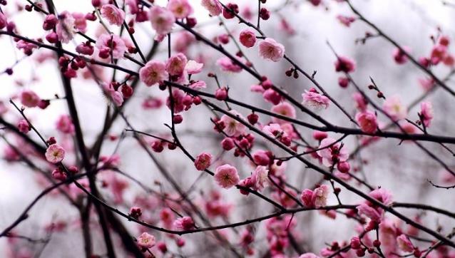 春的私语(诗歌) - 深秋 - 深秋的故事的博客