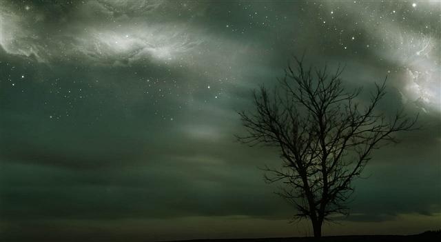 玉兰花开(诗歌)(外一首) - 深秋 - 深秋的故事的博客